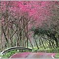 鳳林櫻花步道-2021-02-34.jpg