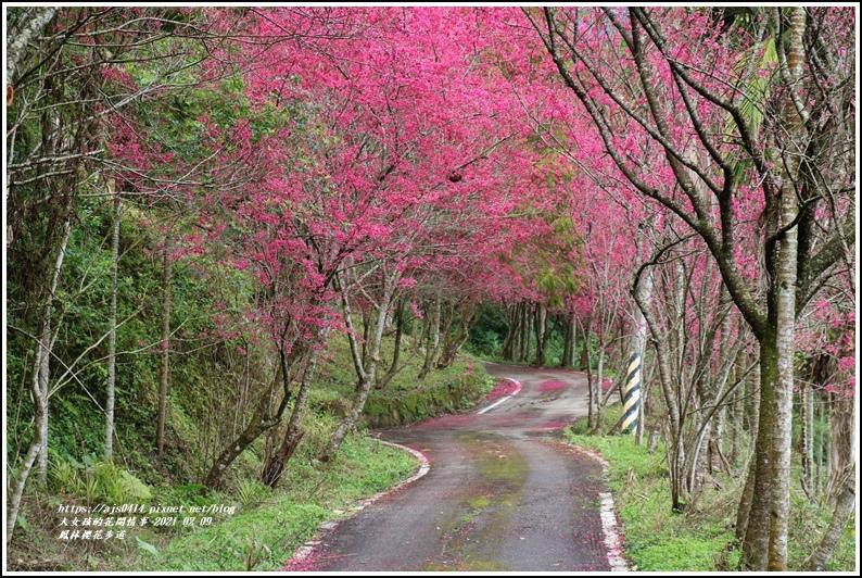 鳳林櫻花步道-2021-02-32.jpg