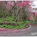 鳳林櫻花步道-2021-02-37.jpg