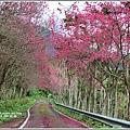 鳳林櫻花步道-2021-02-38.jpg