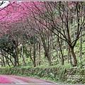 鳳林櫻花步道-2021-02-35.jpg