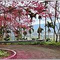 鳳林櫻花步道-2021-02-36.jpg