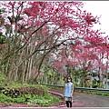 鳳林櫻花步道-2021-02-42.jpg