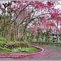 鳳林櫻花步道-2021-02-41.jpg