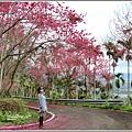 鳳林櫻花步道-2021-02-43.jpg