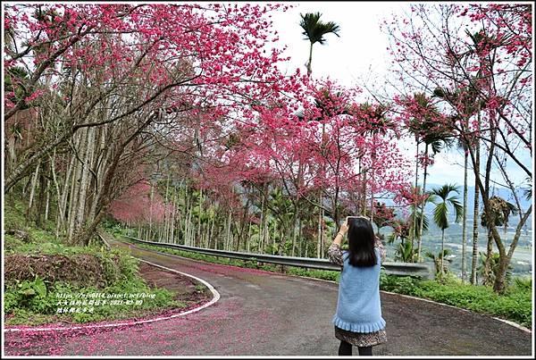 鳳林櫻花步道-2021-02-45.jpg