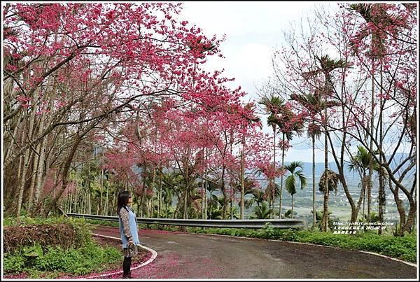 鳳林櫻花步道-2021-02-44.jpg