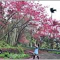 鳳林櫻花步道-2021-02-47.jpg
