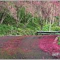 鳳林櫻花步道-2021-02-52.jpg