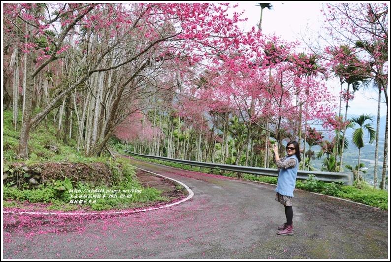 鳳林櫻花步道-2021-02-46.jpg