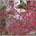 鳳林櫻花步道-2021-02-51.jpg