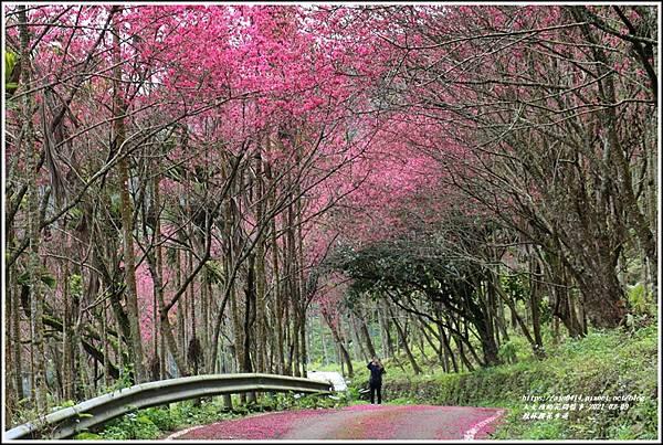 鳳林櫻花步道-2021-02-53.jpg