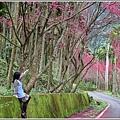 鳳林櫻花步道-2021-02-70.jpg