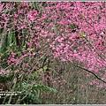 鳳林櫻花步道-2021-02-76.jpg