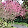 鳳林櫻花步道-2021-02-75.jpg