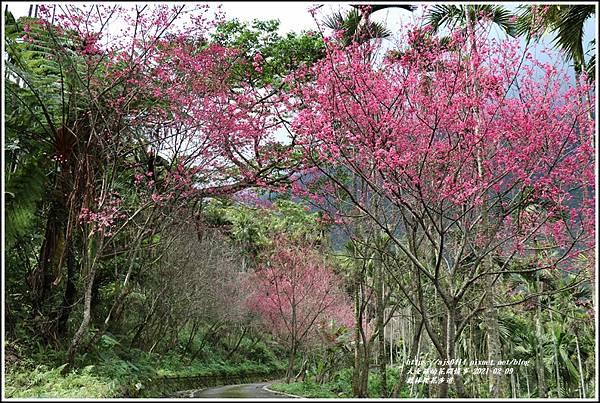 鳳林櫻花步道-2021-02-77.jpg