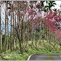 鳳林櫻花步道-2021-02-79.jpg