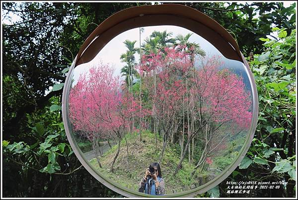 鳳林櫻花步道-2021-02-81.jpg