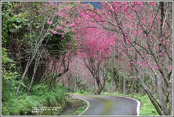 鳳林櫻花步道-2021-02-83.jpg