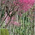 鳳林櫻花步道-2021-02-74.jpg