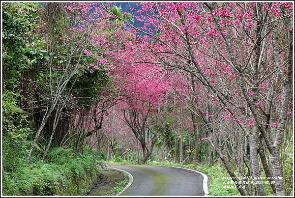 鳳林櫻花步道-2021-02-88.jpg