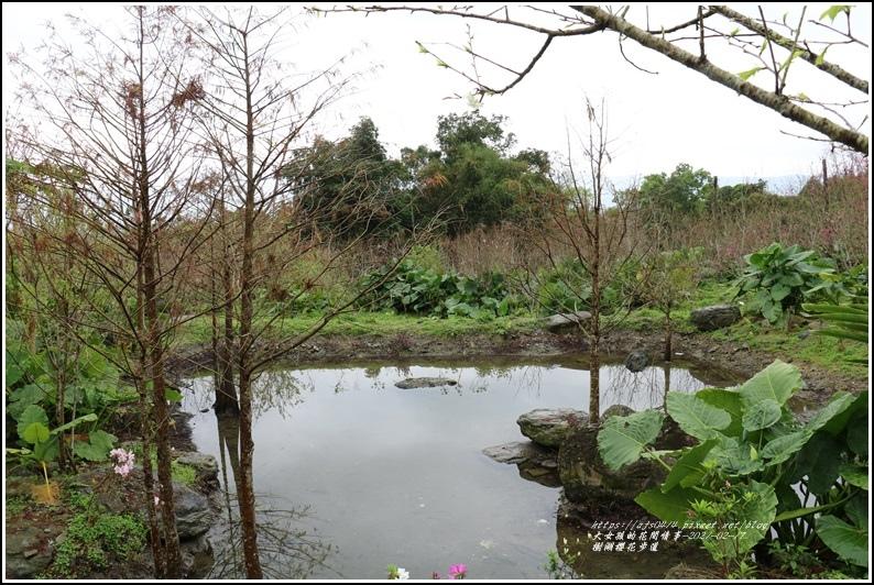 樹湖櫻花步道-2021-02-29.jpg