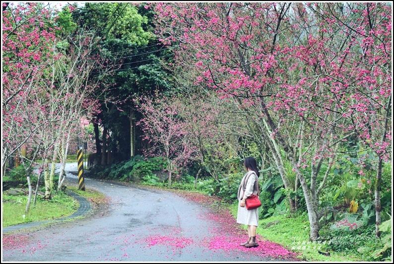 樹湖櫻花步道-2021-02-38.jpg