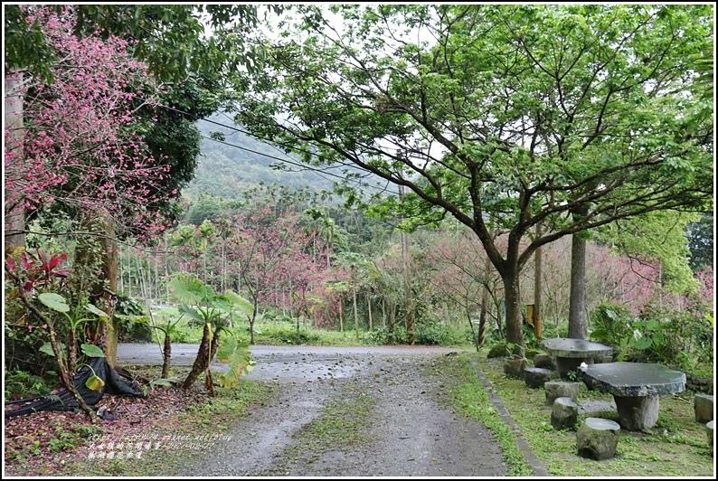 樹湖櫻花步道-2021-02-48.jpg