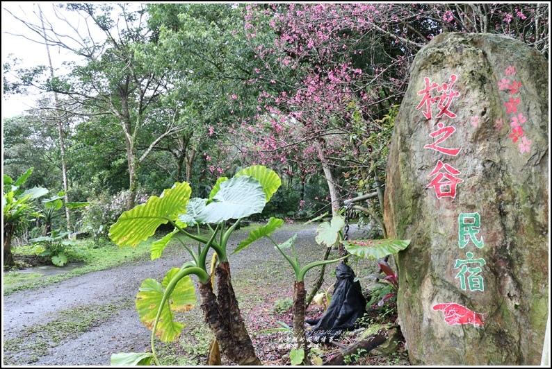 樹湖櫻花步道-2021-02-50.jpg
