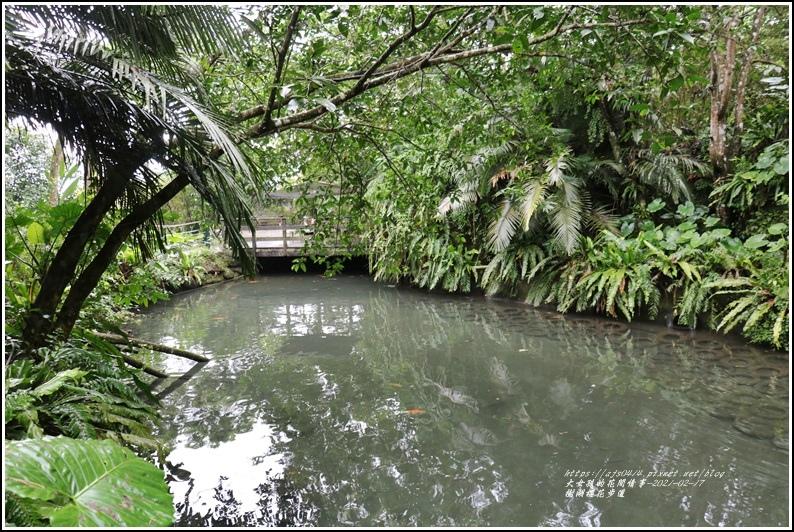 樹湖櫻花步道-2021-02-63.jpg