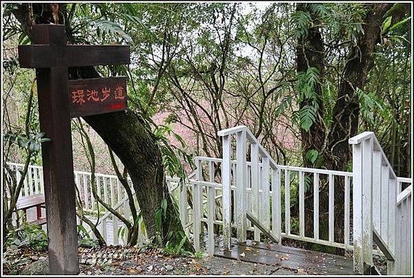 樹湖櫻花步道-2021-02-66.jpg