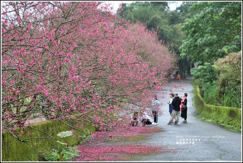 樹湖櫻花步道-2021-02-81.jpg