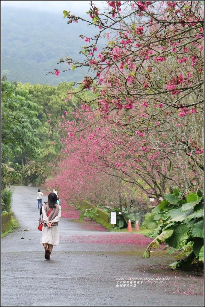 樹湖櫻花步道-2021-02-89.jpg