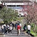 玉山神學院櫻花-2021-02-04.jpg