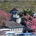 玉山神學院櫻花-2021-02-03.jpg