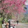 玉山神學院櫻花-2021-02-18.jpg
