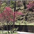 玉山神學院櫻花-2021-02-35.jpg