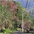 玉山神學院櫻花-2021-02-42.jpg