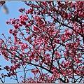 玉山神學院櫻花-2021-02-54.jpg