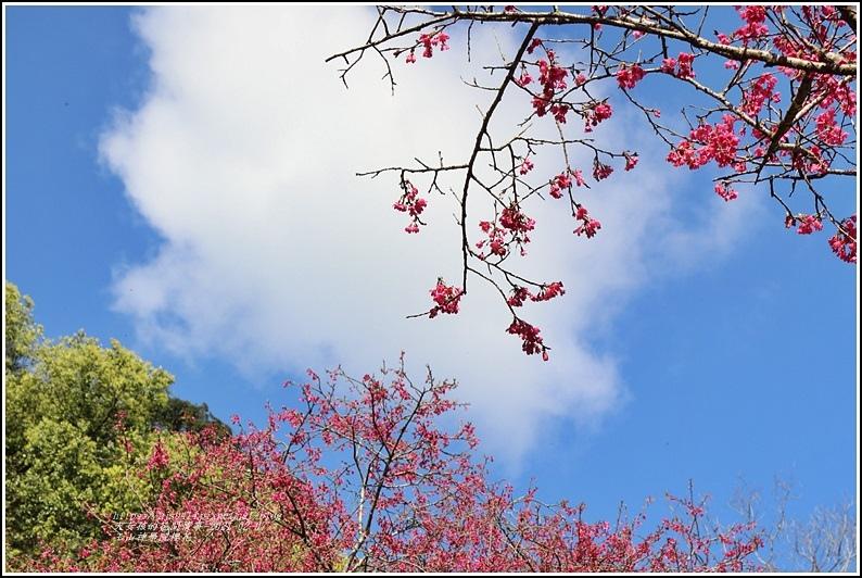 玉山神學院櫻花-2021-02-62.jpg