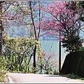 玉山神學院櫻花-2021-02-57.jpg