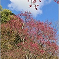 玉山神學院櫻花-2021-02-60.jpg