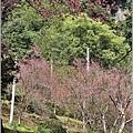 玉山神學院櫻花-2021-02-61.jpg