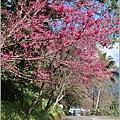 玉山神學院櫻花-2021-02-68.jpg