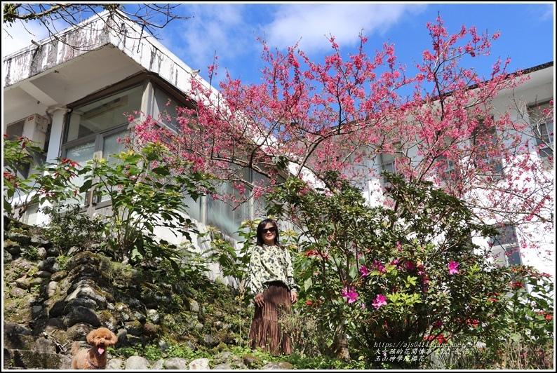 玉山神學院櫻花-2021-02-74.jpg