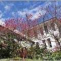 玉山神學院櫻花-2021-02-77.jpg