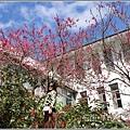 玉山神學院櫻花-2021-02-78.jpg