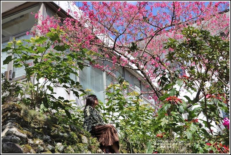 玉山神學院櫻花-2021-02-80.jpg