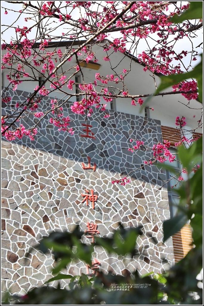 玉山神學院櫻花-2021-02-87.jpg