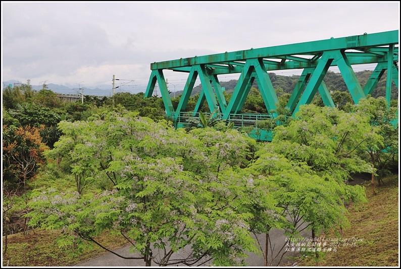 紅葉溪防汛道路苦楝花-2021-03-01.jpg